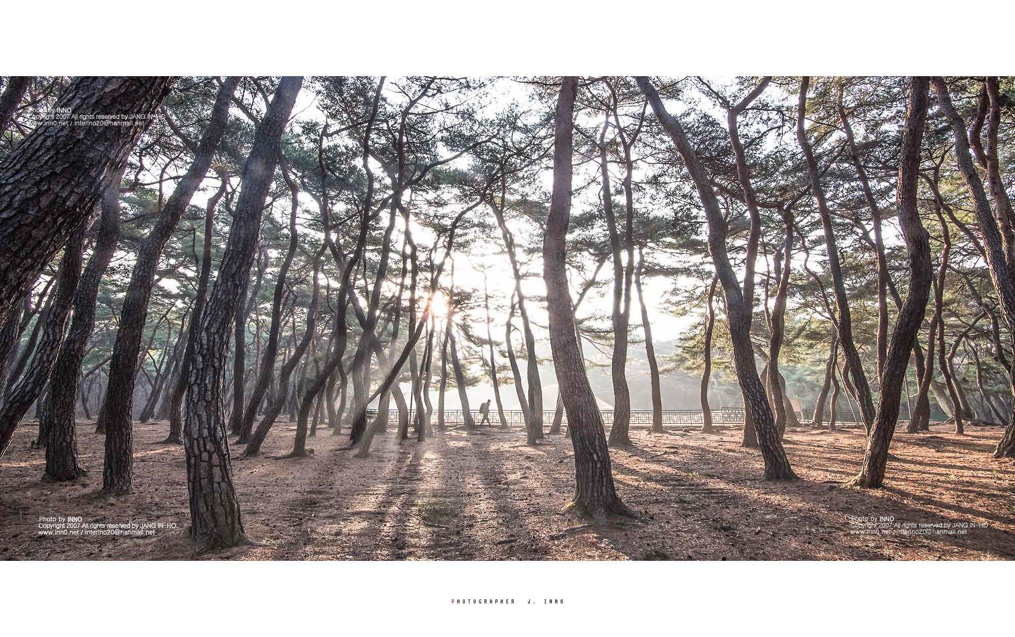 삼릉4.jpg